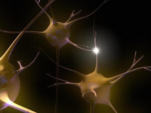 B0007851 Neuronal synapses